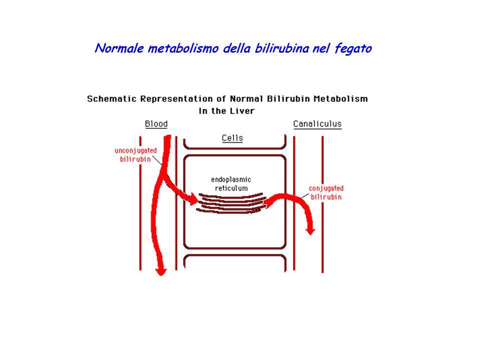 Normale metabolismo della bilirubina nel fegato
