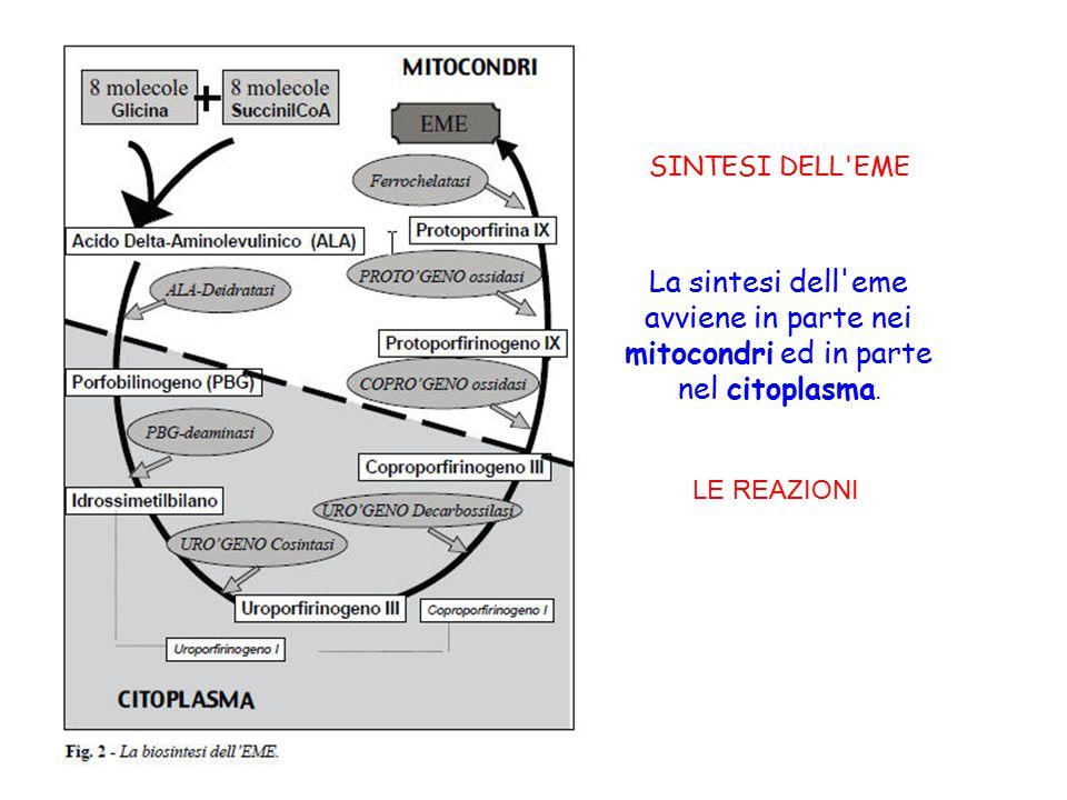 SINTESI DELL EME La sintesi dell eme avviene in parte nei mitocondri ed in parte nel citoplasma.