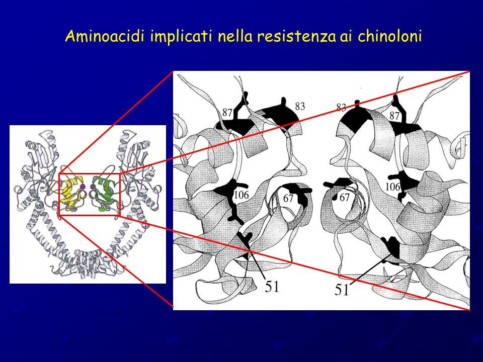 Aminoacidi implicati nella resistenza ai chinoloni
