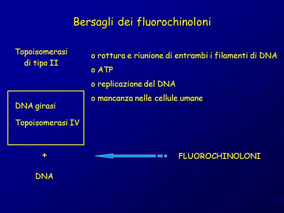 Bersagli dei fluorochinoloni