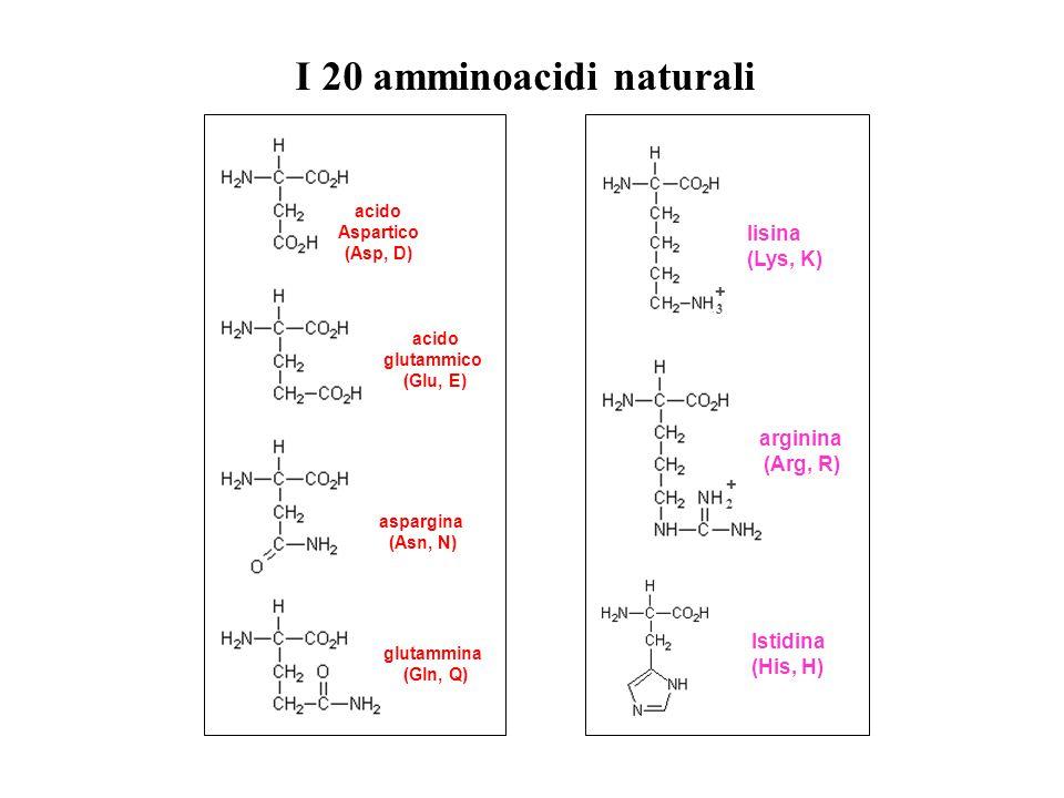 I 20 amminoacidi naturali