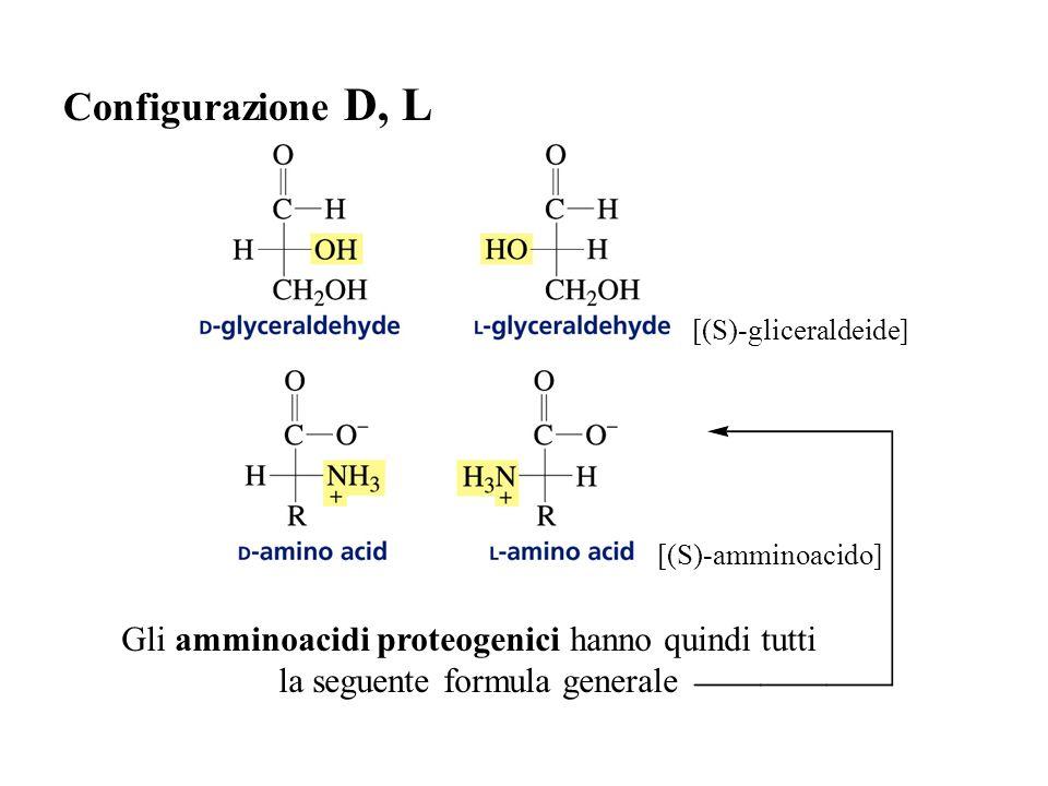 Configurazione D, L Gli amminoacidi proteogenici hanno quindi tutti