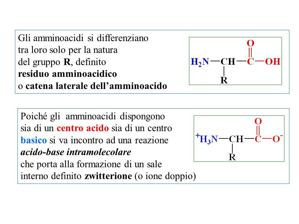 Gli amminoacidi si differenziano