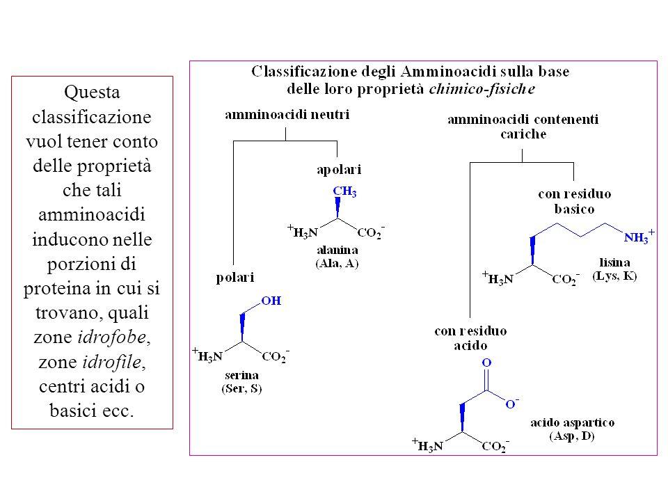Questa classificazione vuol tener conto delle proprietà che tali amminoacidi inducono nelle porzioni di proteina in cui si trovano, quali zone idrofobe, zone idrofile, centri acidi o basici ecc.