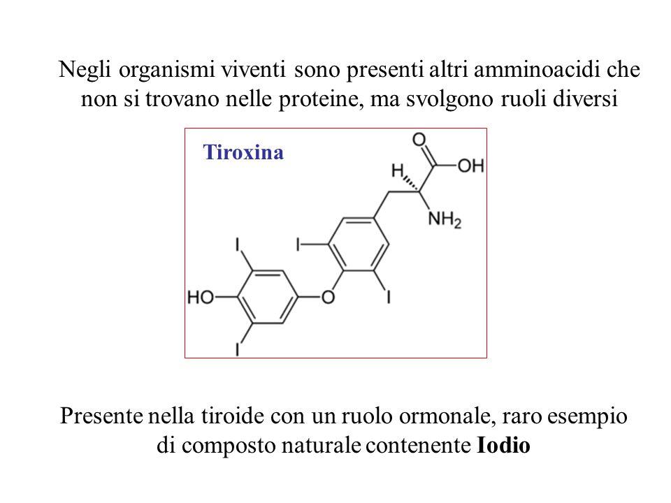 Negli organismi viventi sono presenti altri amminoacidi che non si trovano nelle proteine, ma svolgono ruoli diversi