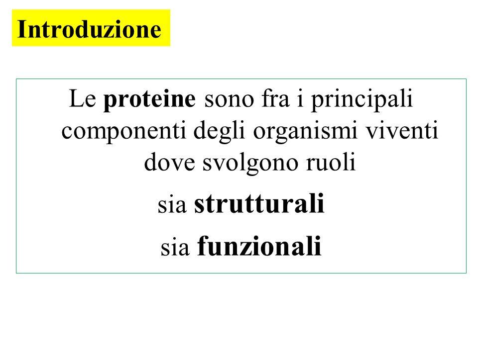 Introduzione Le proteine sono fra i principali componenti degli organismi viventi dove svolgono ruoli.