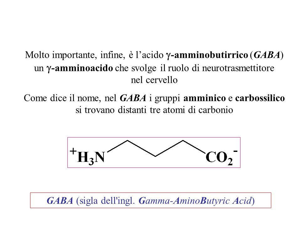 Molto importante, infine, è l'acido g-amminobutirrico (GABA)