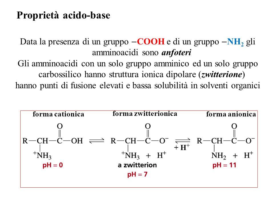 hanno punti di fusione elevati e bassa solubilità in solventi organici