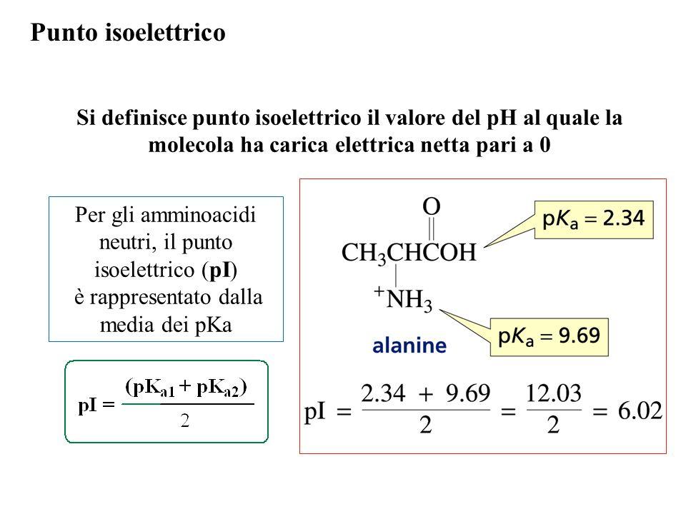 Punto isoelettrico Si definisce punto isoelettrico il valore del pH al quale la molecola ha carica elettrica netta pari a 0.