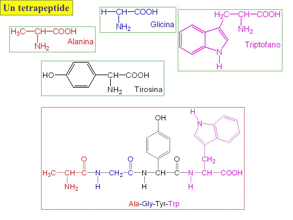 Un tetrapeptide