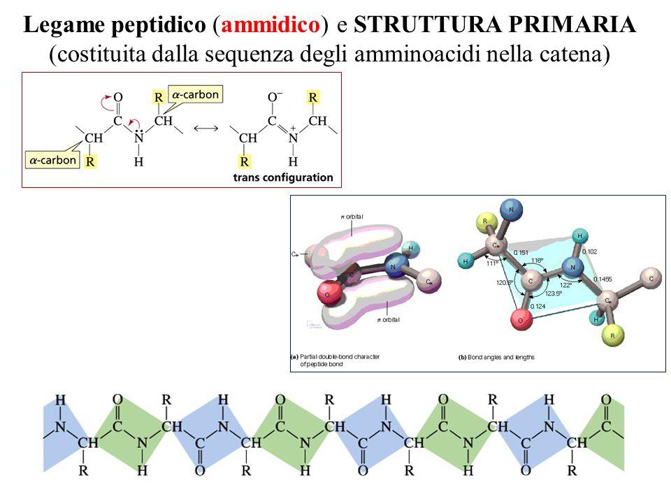 Legame peptidico (ammidico) e STRUTTURA PRIMARIA