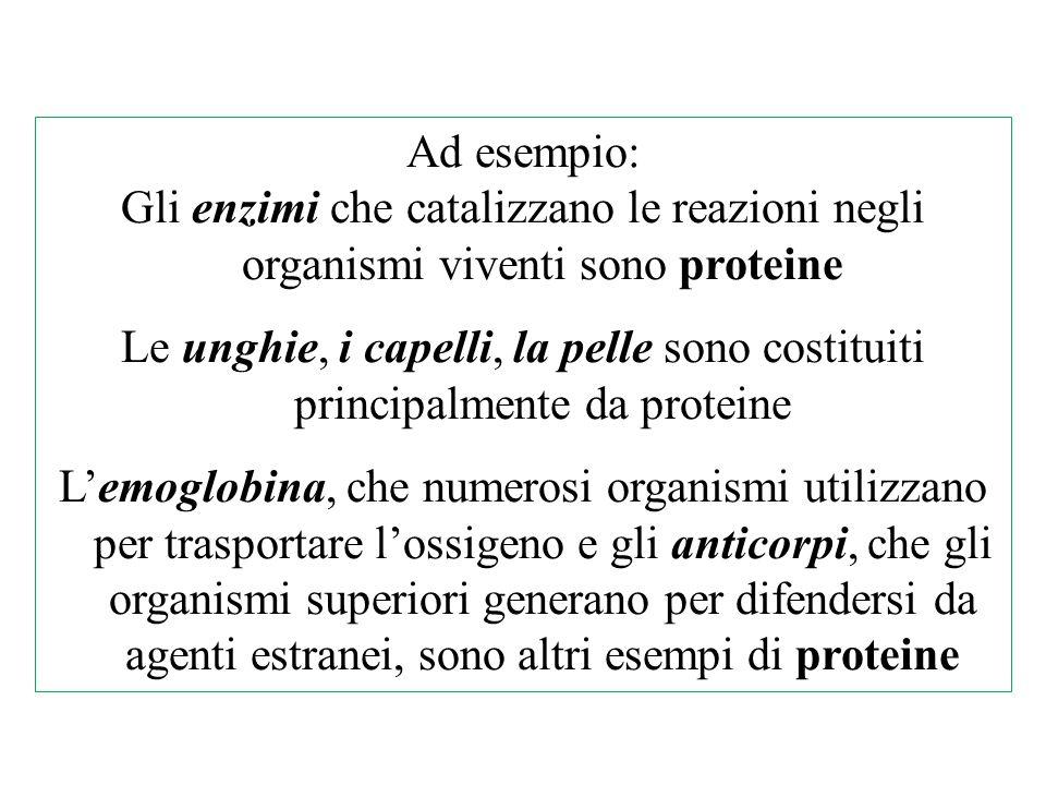 Ad esempio: Gli enzimi che catalizzano le reazioni negli organismi viventi sono proteine.