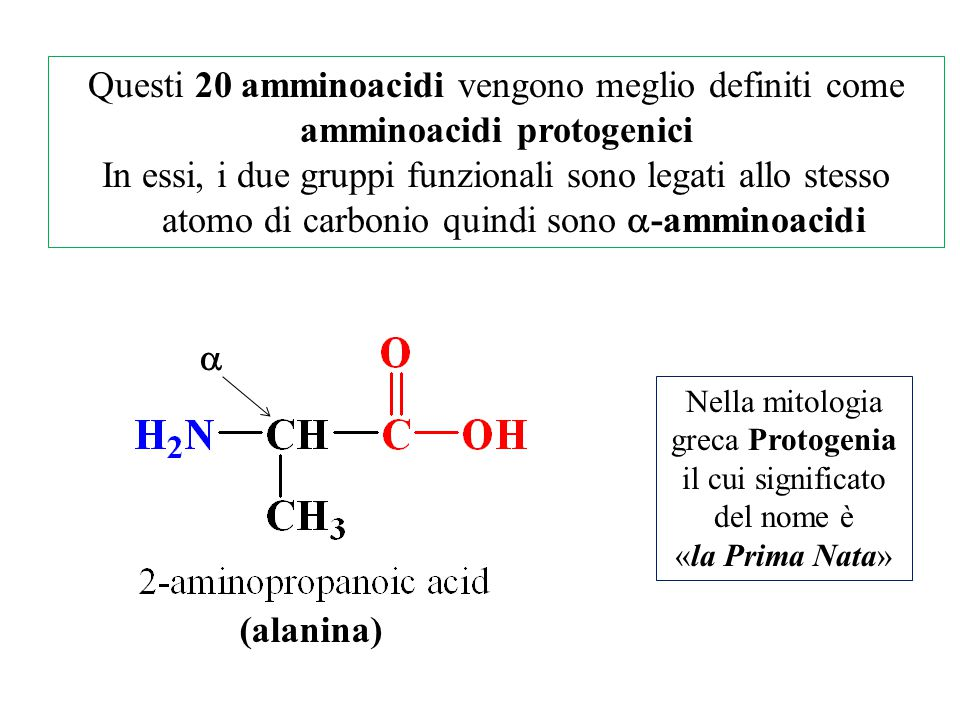 amminoacidi protogenici
