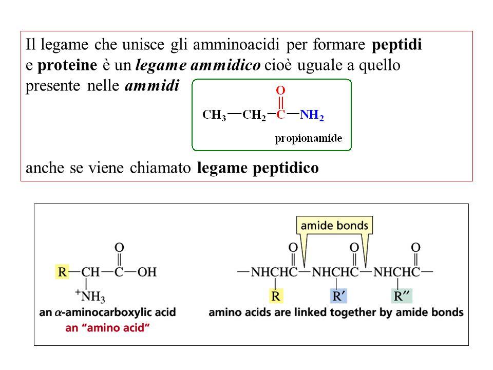 Il legame che unisce gli amminoacidi per formare peptidi
