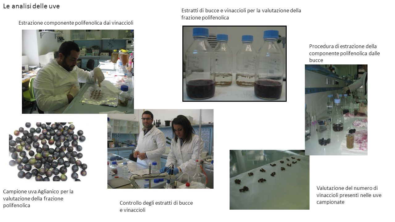 Le analisi delle uve Estratti di bucce e vinaccioli per la valutazione della frazione polifenolica.