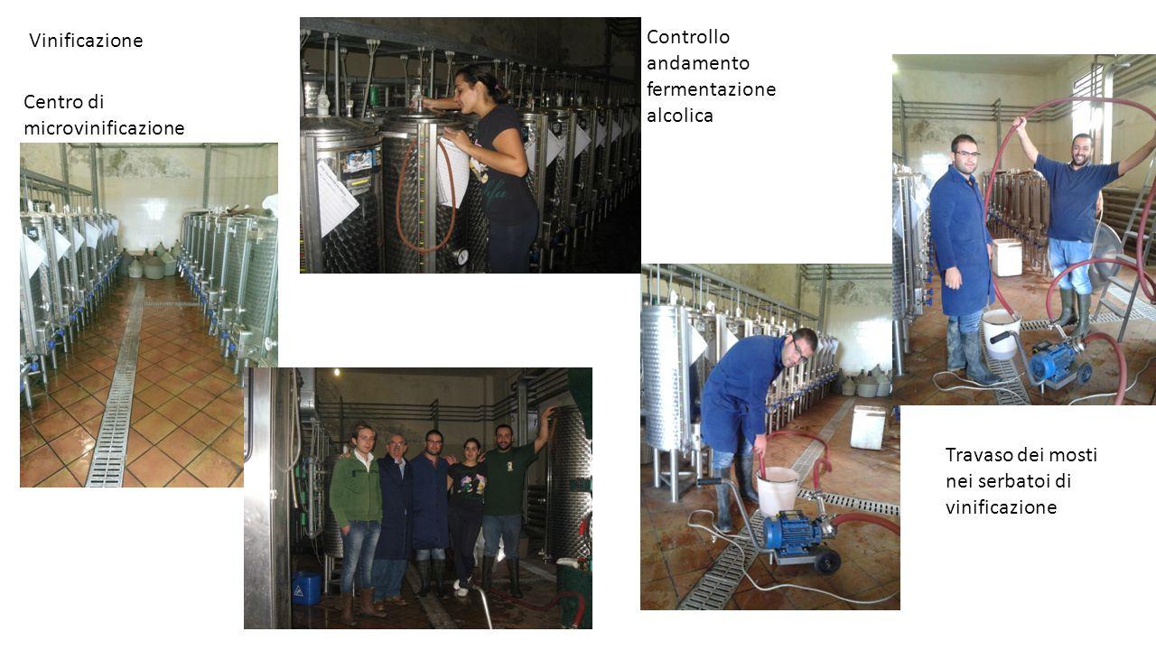 Vinificazione Controllo andamento fermentazione alcolica.
