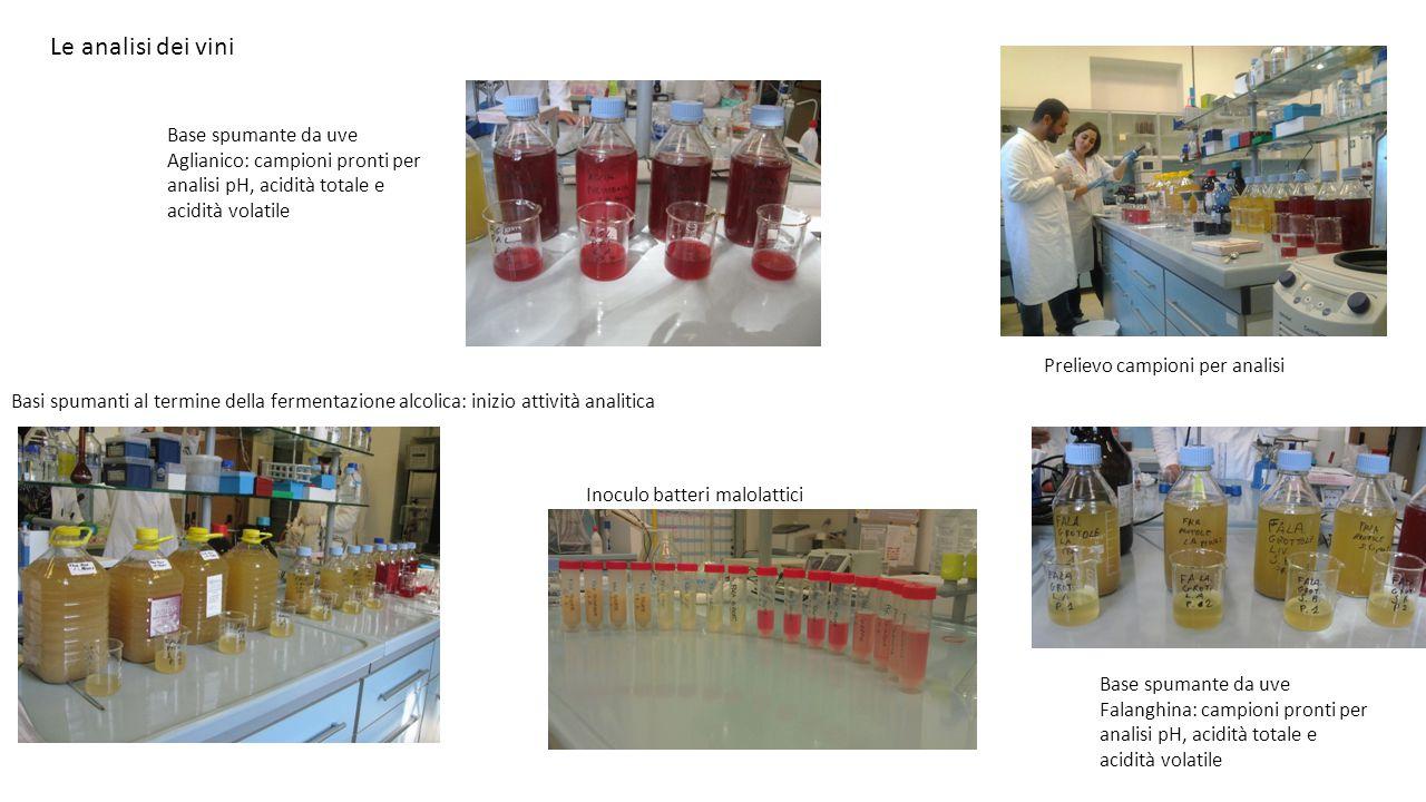 Le analisi dei vini Base spumante da uve Aglianico: campioni pronti per analisi pH, acidità totale e acidità volatile.