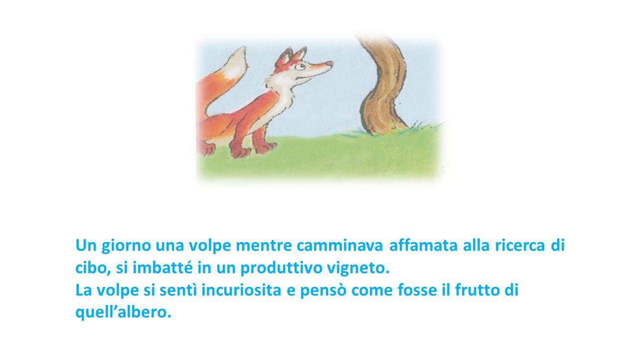 Un giorno una volpe mentre camminava affamata alla ricerca di cibo, si imbatté in un produttivo vigneto.