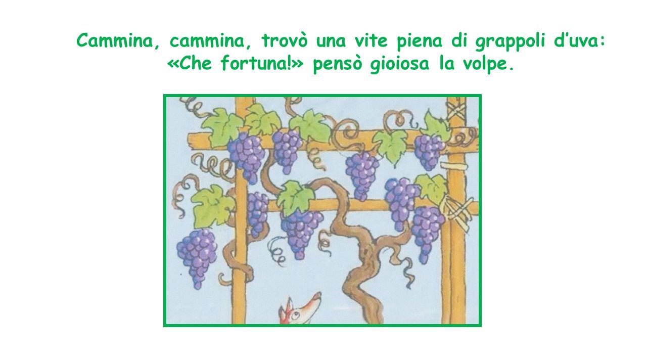 Cammina, cammina, trovò una vite piena di grappoli d'uva: «Che fortuna
