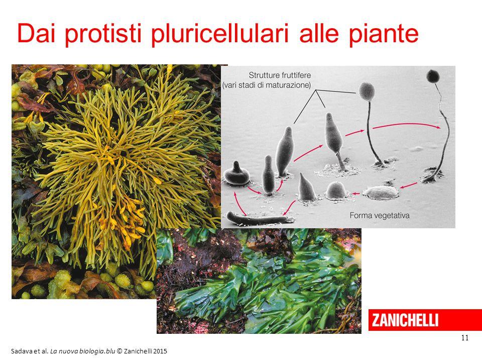 Dai protisti pluricellulari alle piante