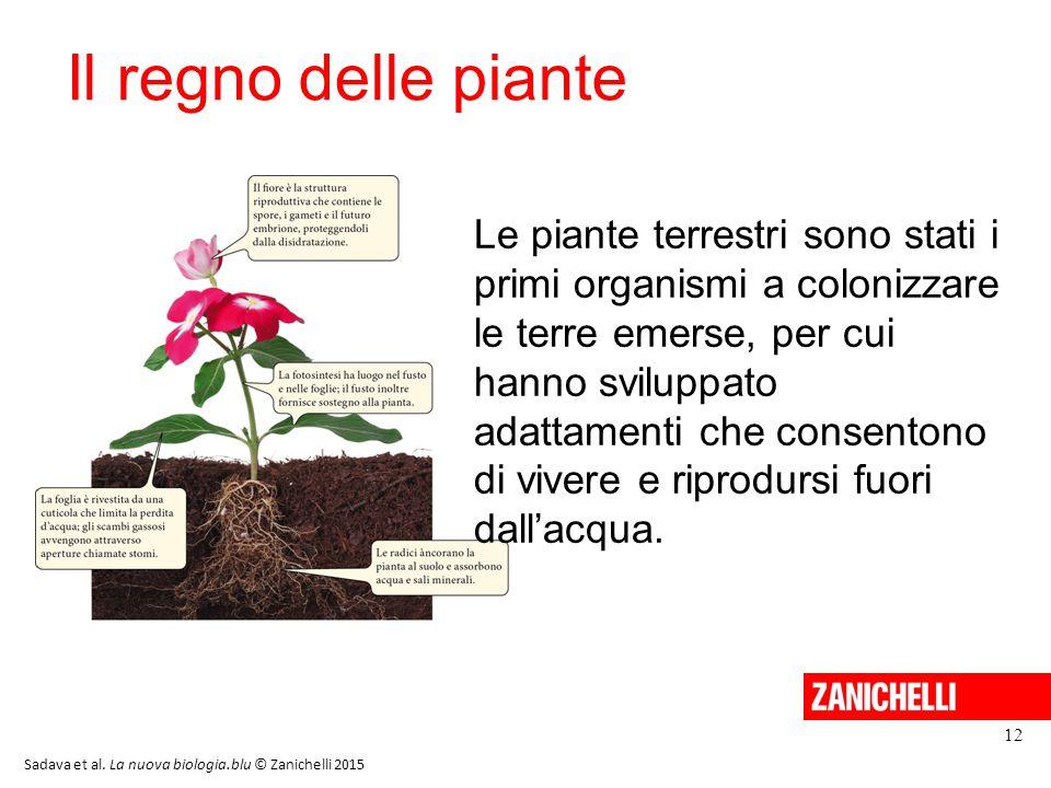 13/11/11 Il regno delle piante.