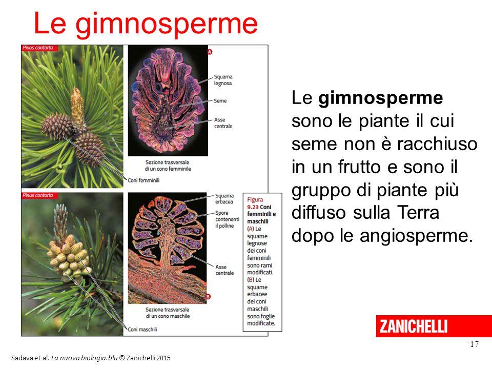 Le gimnosperme 13/11/11. Le gimnosperme sono le piante il cui seme non è racchiuso in un frutto e sono il gruppo di piante più.