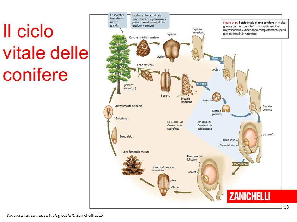 Il ciclo vitale delle conifere