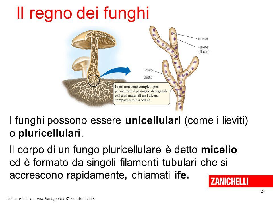Il regno dei funghi 13/11/11. I funghi possono essere unicellulari (come i lieviti) o pluricellulari.