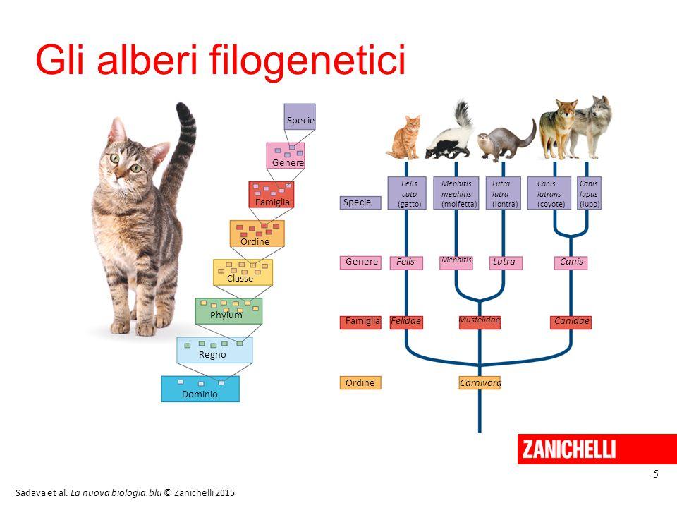 Gli alberi filogenetici