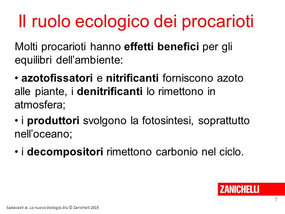 Il ruolo ecologico dei procarioti