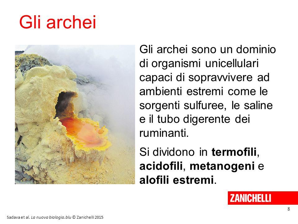 13/11/11 Gli archei.
