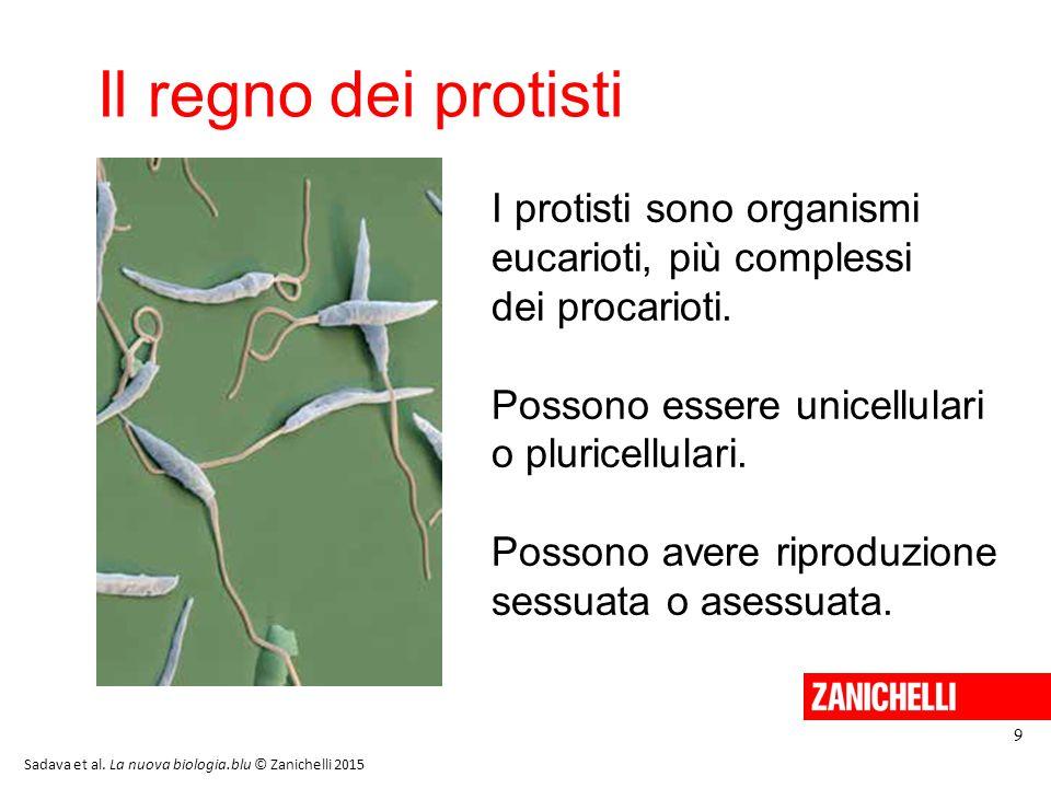 13/11/11 Il regno dei protisti. I protisti sono organismi eucarioti, più complessi dei procarioti.