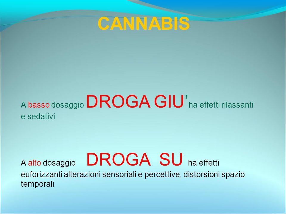 CANNABIS A basso dosaggio DROGA GIU'ha effetti rilassanti e sedativi