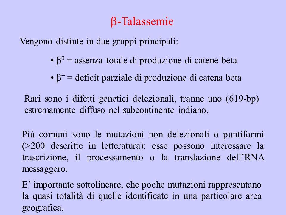 b-Talassemie Vengono distinte in due gruppi principali: