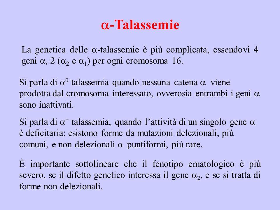 a-Talassemie La genetica delle a-talassemie è più complicata, essendovi 4 geni a, 2 (a2 e a1) per ogni cromosoma 16.