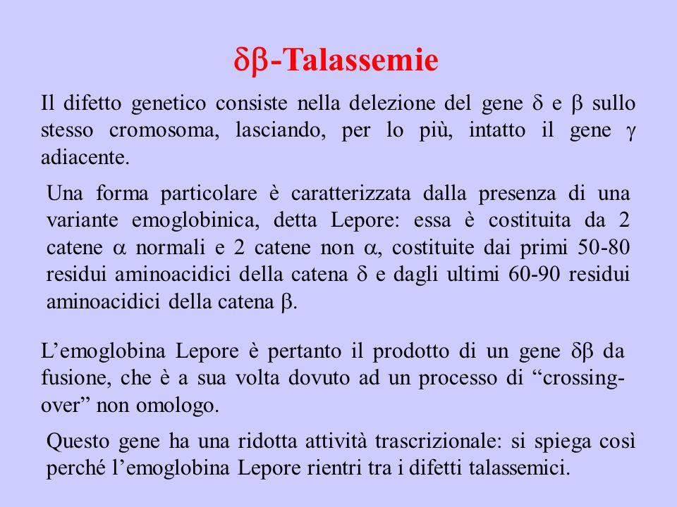 db-Talassemie Il difetto genetico consiste nella delezione del gene d e b sullo stesso cromosoma, lasciando, per lo più, intatto il gene g adiacente.