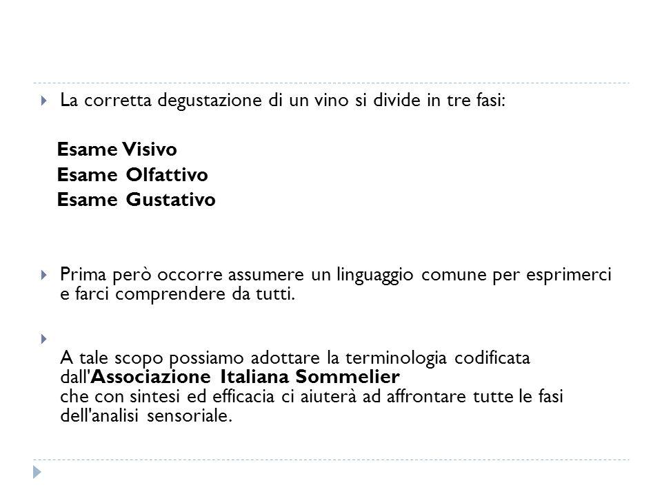 La corretta degustazione di un vino si divide in tre fasi: