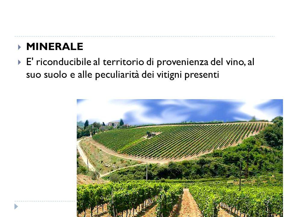 MINERALE E riconducibile al territorio di provenienza del vino, al suo suolo e alle peculiarità dei vitigni presenti.