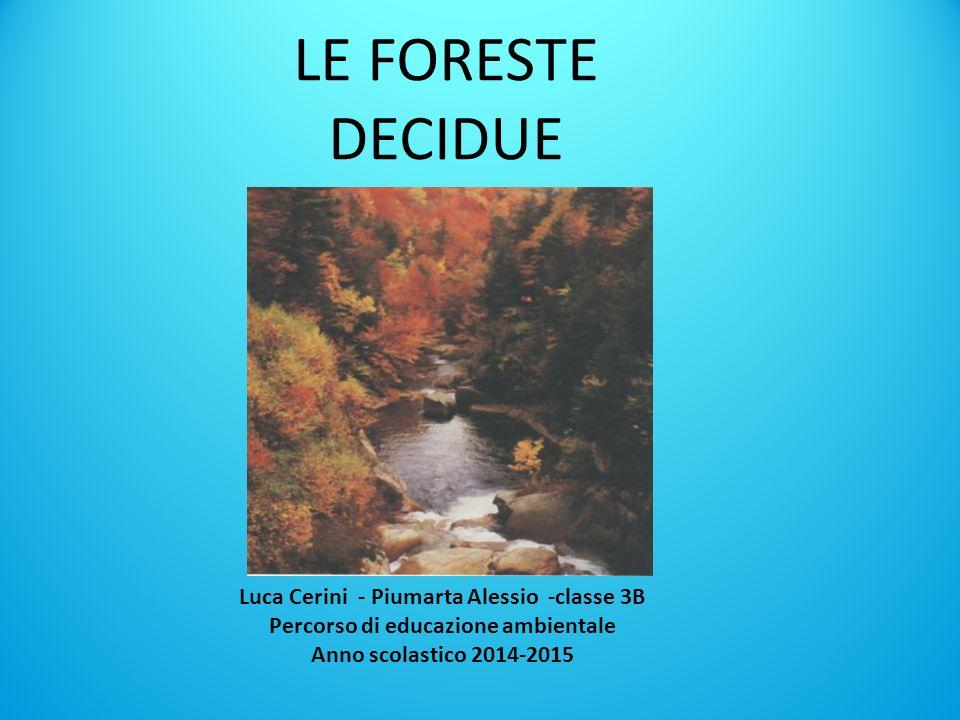 LE FORESTE DECIDUE Luca Cerini - Piumarta Alessio -classe 3B