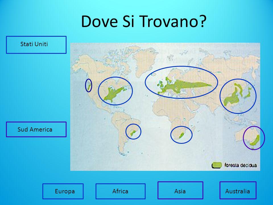 Dove Si Trovano Stati Uniti Sud America Africa Europa Asia Australia