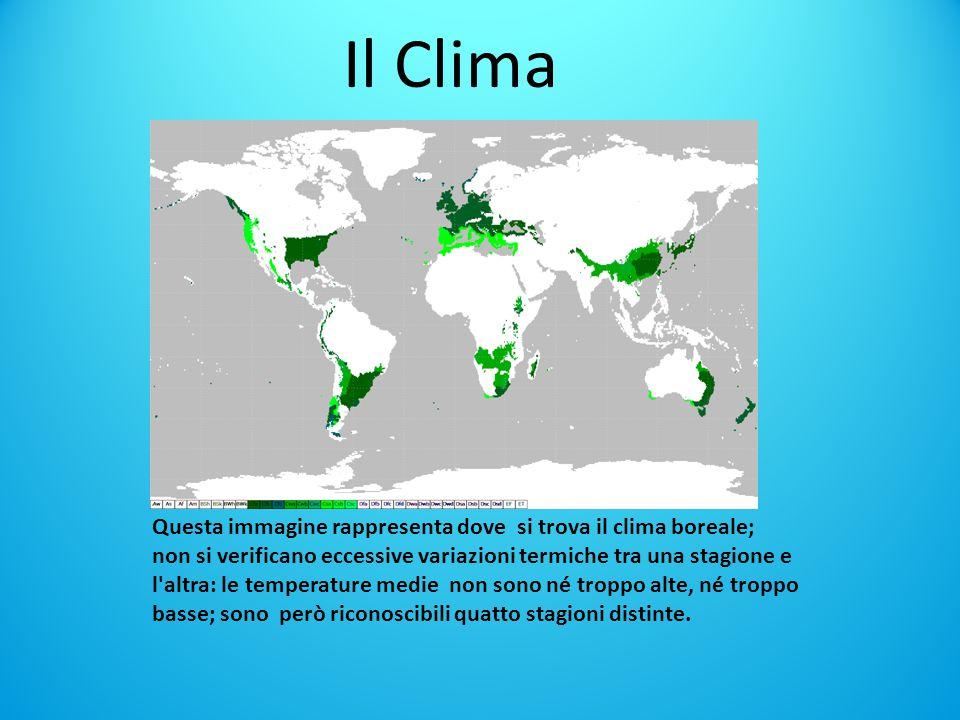 Il Clima Questa immagine rappresenta dove si trova il clima boreale;