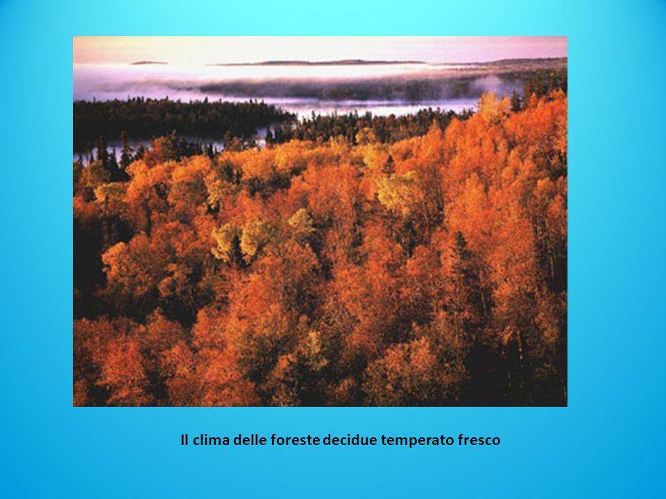 Il clima delle foreste decidue temperato fresco