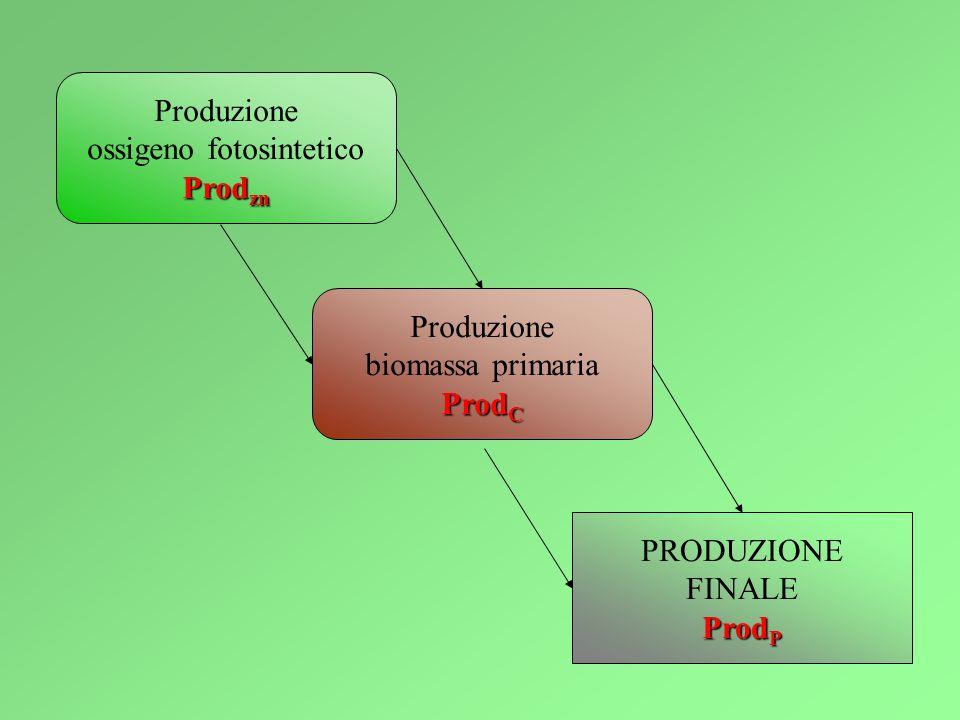 ossigeno fotosintetico