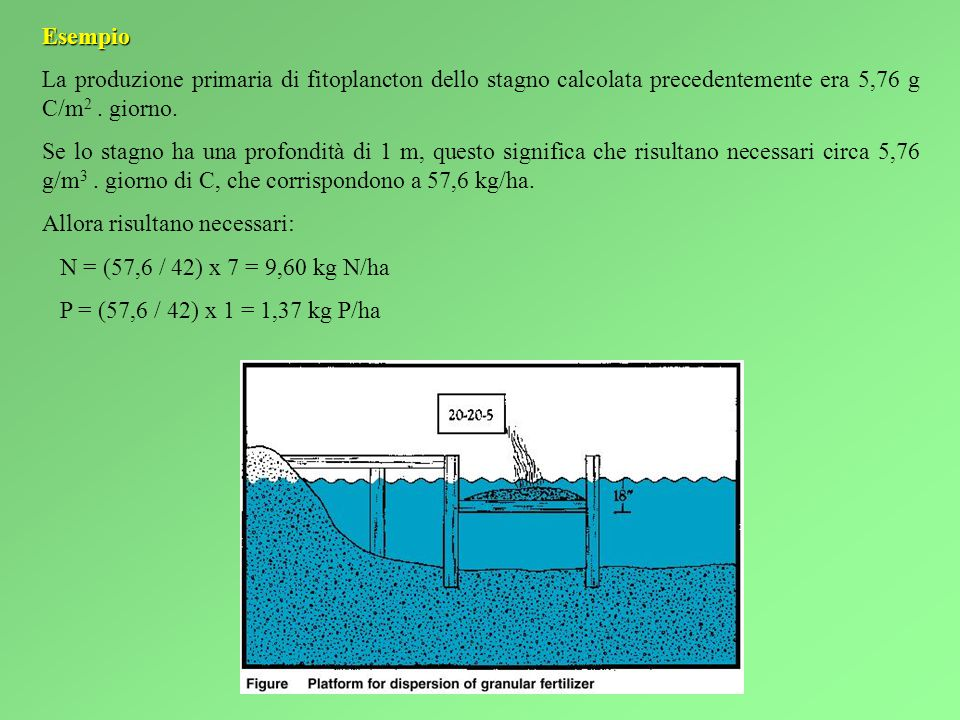 Esempio La produzione primaria di fitoplancton dello stagno calcolata precedentemente era 5,76 g C/m2 . giorno.