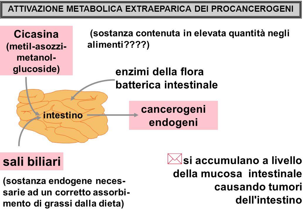 sali biliari Cicasina enzimi della flora batterica intestinale