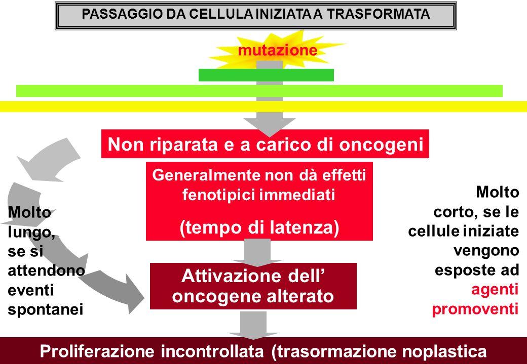 (tempo di latenza) Attivazione dell' oncogene alterato