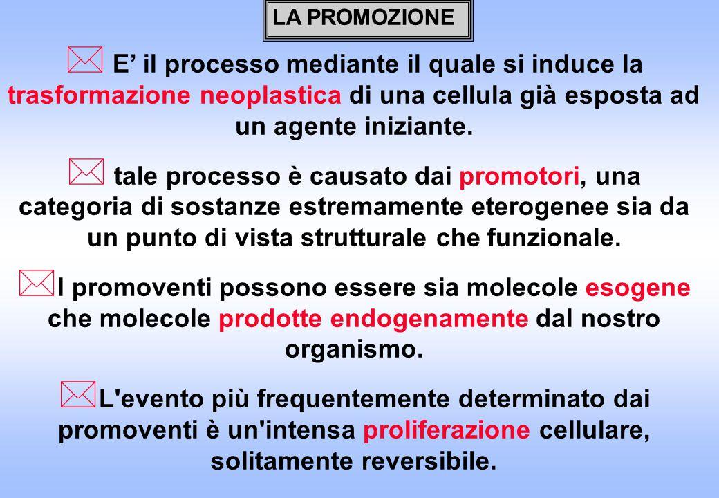 LA PROMOZIONE E' il processo mediante il quale si induce la trasformazione neoplastica di una cellula già esposta ad un agente iniziante.