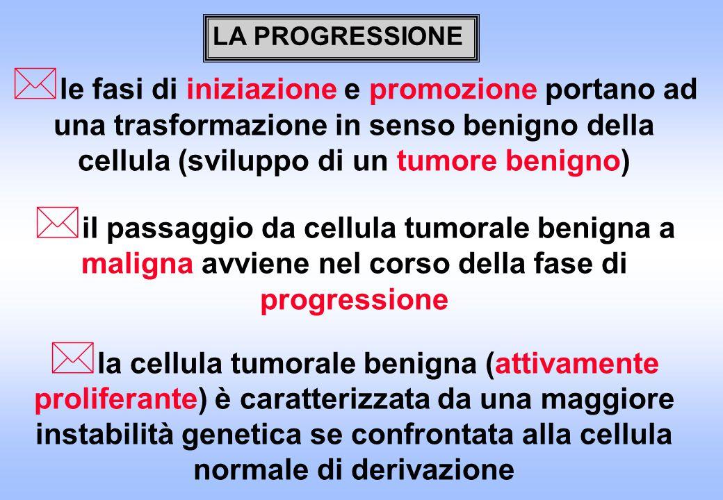 LA PROGRESSIONE le fasi di iniziazione e promozione portano ad una trasformazione in senso benigno della cellula (sviluppo di un tumore benigno)