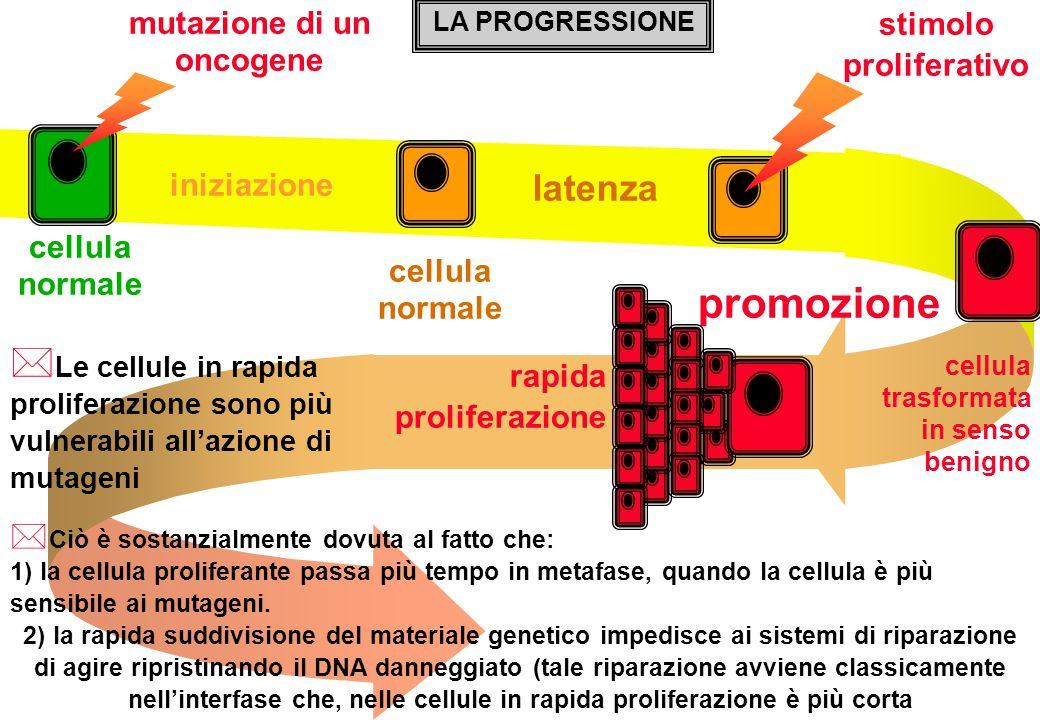 mutazione di un oncogene stimolo proliferativo