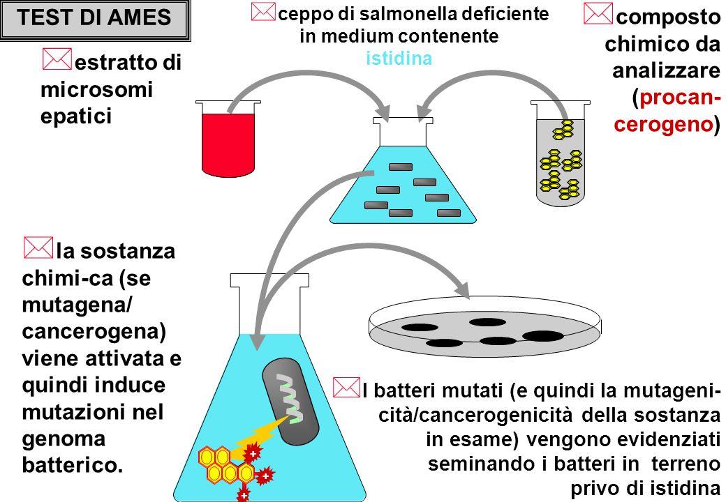 ceppo di salmonella deficiente